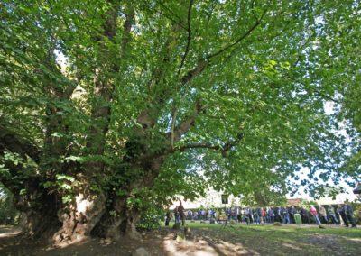 Ausrufung Linde Heede: Weit über 100 Besucher zur Ausrufung (Foto: Herbert Gruber)