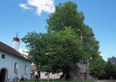 Linde Hochmössingen: Baumplatz vor der Kapelle