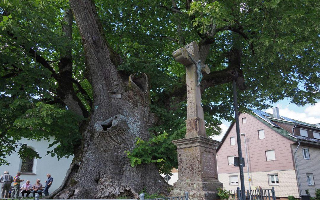 """""""Käppeles-Linde"""" wird fünfter Nationalerbe-Baum"""