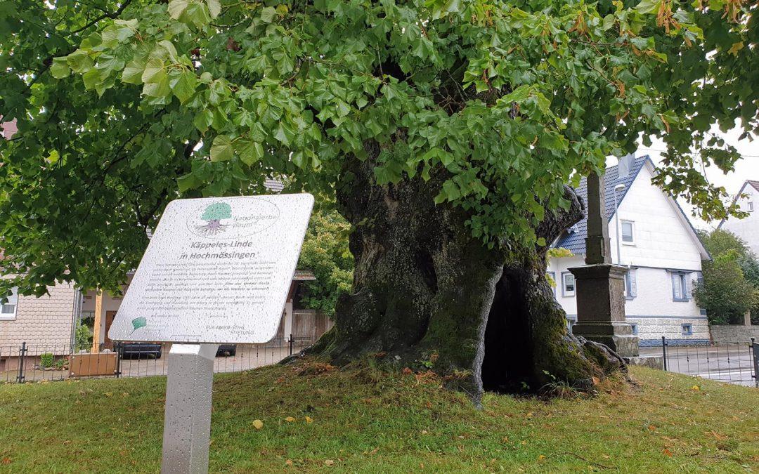 Linde Hochmössingen als fünfter Nationalerbe-Baum ausgerufen