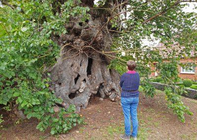Staunen über diese Baumskulptur