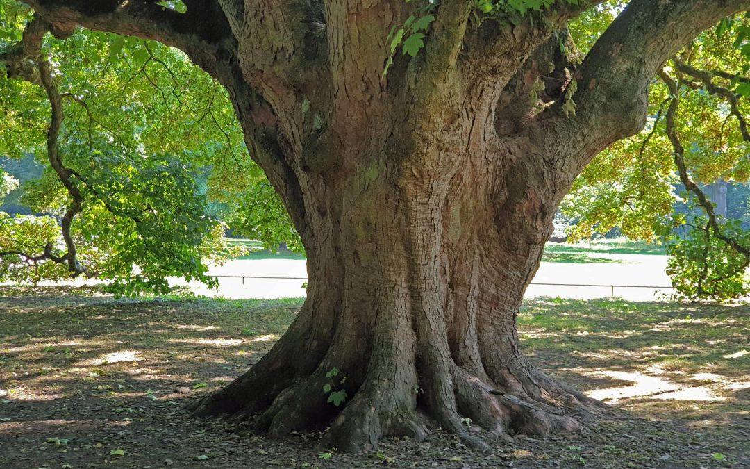 Sechster Nationalerbe-Baum steht fest