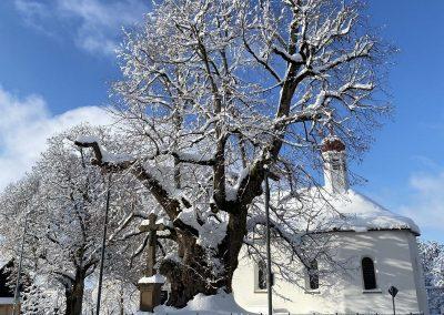 Die Linde in winterlicher Pracht, Foto: S. JAUD
