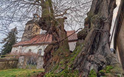 Achter Nationalerbe-Baum steht fest