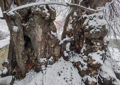 Prangerlinde Großpörthen: Strukturen mit Schnee