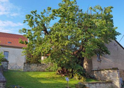 Ein ideales Baum-Umfeld für ein langes Weiterleben