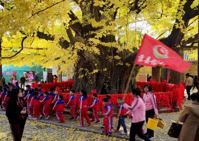 Ginkgo Jahnishausen: Ort ritueller Zeremonien und weibl. Elternteil von heutigen Ginkgos überall auf der Erde