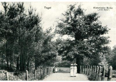 Ausrufung Dicke Marie: Zustand des Baumes vor etwa 100 Jahren am Ufer-Promenadenweg auf alter Postkarte