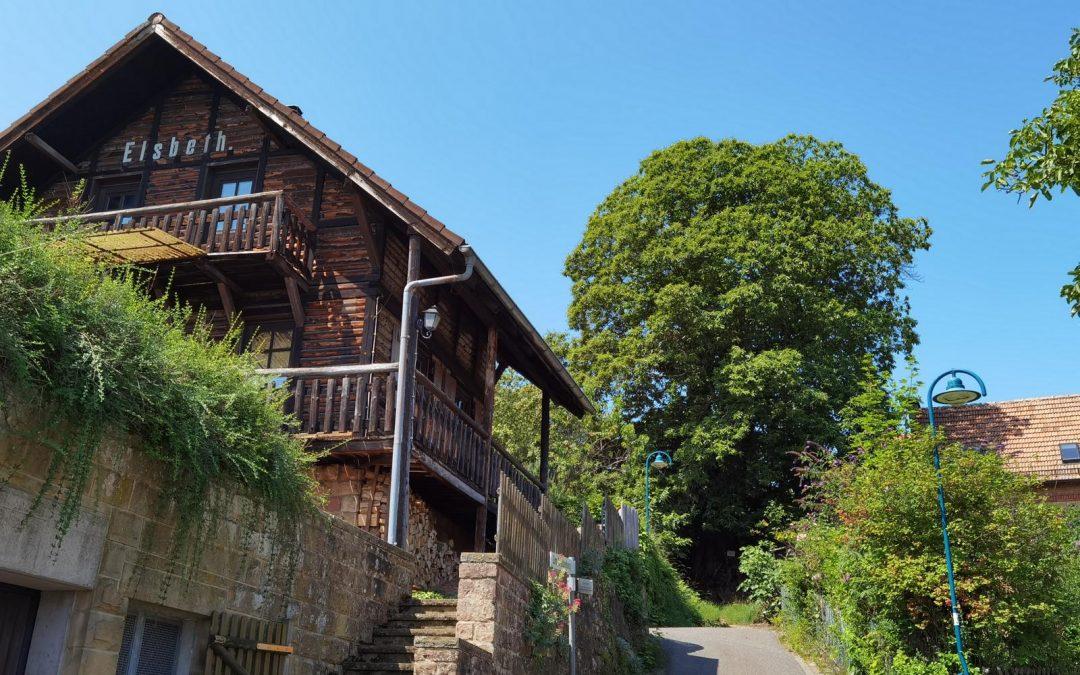 Ess-Kastanie in Gleisweiler (Pfalz) wird elfter Nationalerbe-Baum