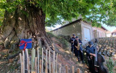 Ess-Kastanie in Gleisweiler als Nationalerbe-Baum ausgerufen