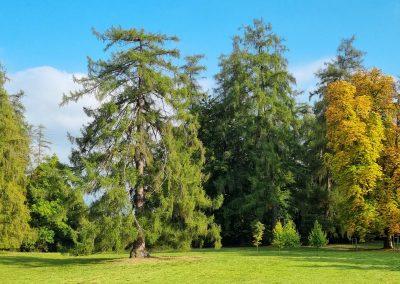 Aufrufung Lärche Kassel: Die bisher relativ unbekannte und nun ziemlich berühmte Lärche nach ihrer Ausrufung in der Nachmittagssonne erstrahlend