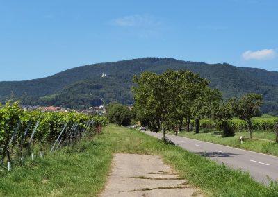 Kastanie Gleisweiler: Blick auf die Landschaft um Gleisweiler mit Wald und Weinbergen