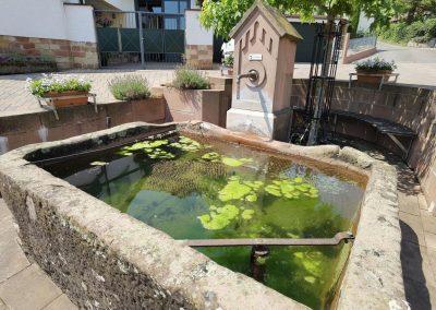 Kastanie Gleisweiler: Der 500 Jahre alte Hinzloch-Brunnentrog nahe dem Baum